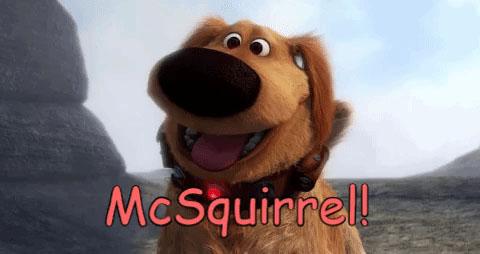 McSquirrel!