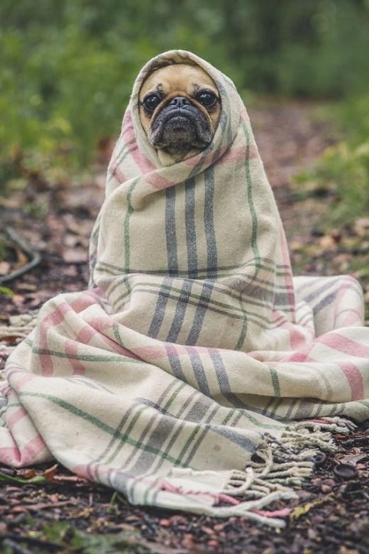 Dog heat therapy, dog treatment, dog rehab, dog rehabilitation, dog osteopathy