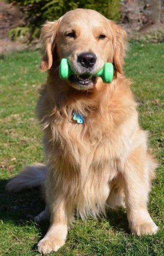 Dog training, dog rehab, dog rehabilitation, dog treatment, dog osteopathy