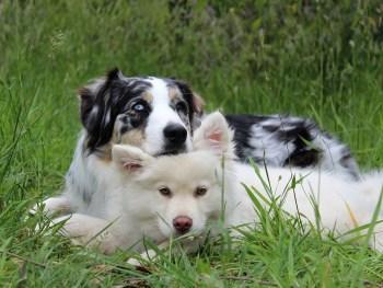 dog treatment, dog rehab, dog rehabilitation, dog osteopathy, young dog