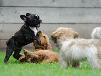 puppies playing, puppy exercise