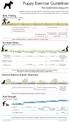 puppy exercise, puppy exercise chart, puppy exercise guidelines, puppy exercise infographic