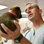puppy touch desensitization, happy vet visit, puppy vet visit