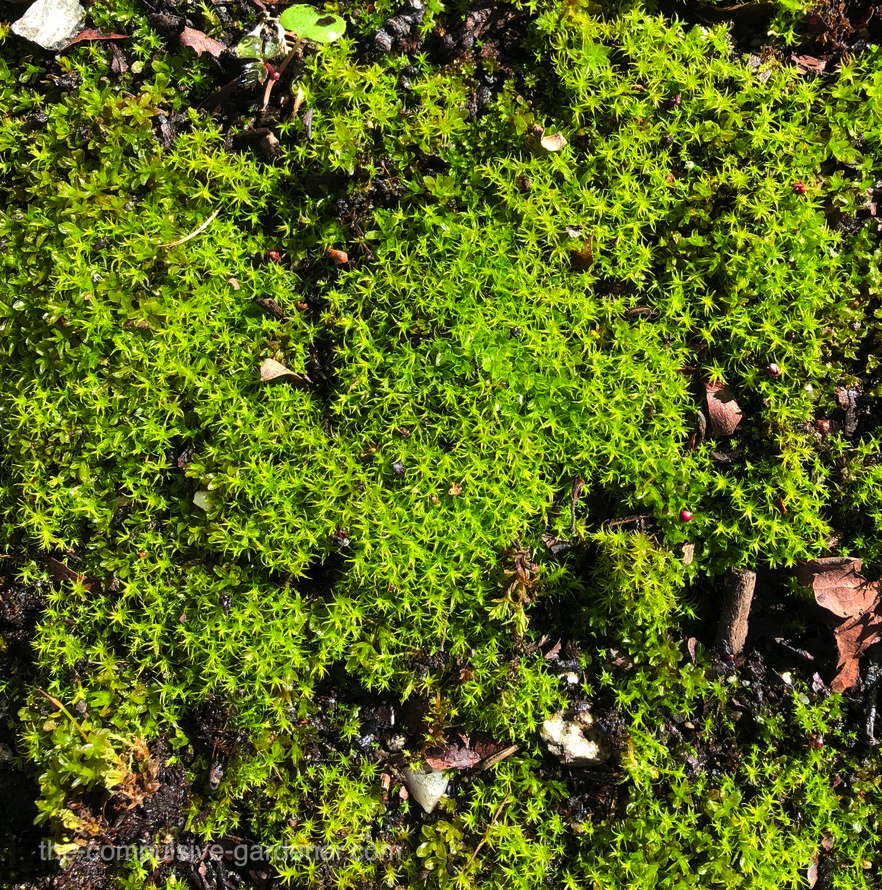 Moss on pavement