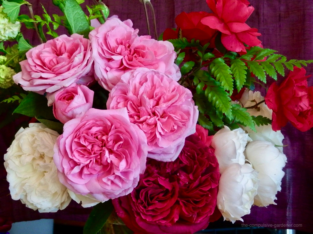 Garden Rose Bouquet | pink, red and white old roses