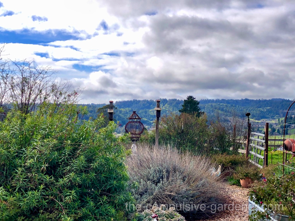 A lovely garden atop a hill along the backroads of Sonoma County, CA