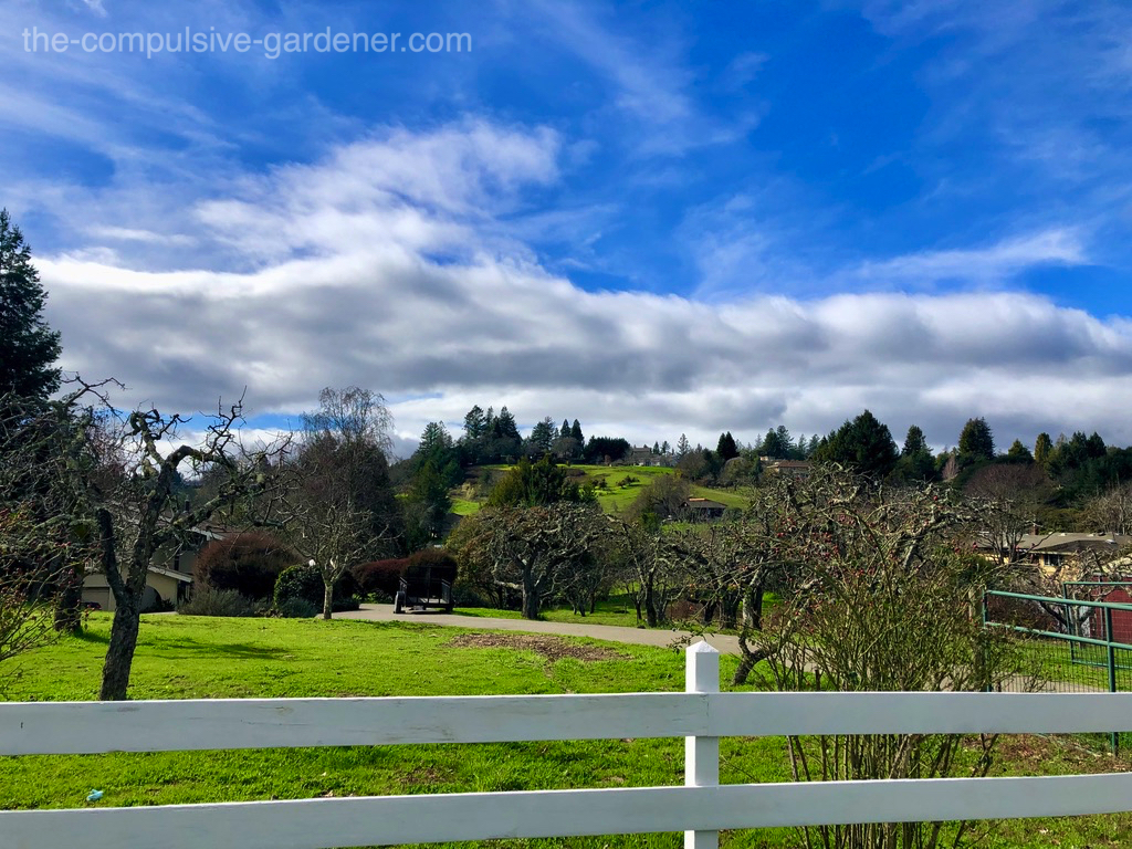 Rolling hills of Sonoma County