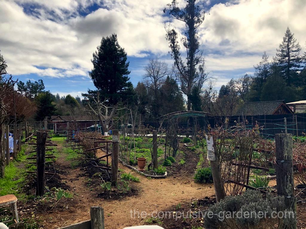The wondrous garden of Wildflour Bakery