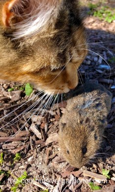 The gopher multiply in the spring. The cats spend long hours on watch.