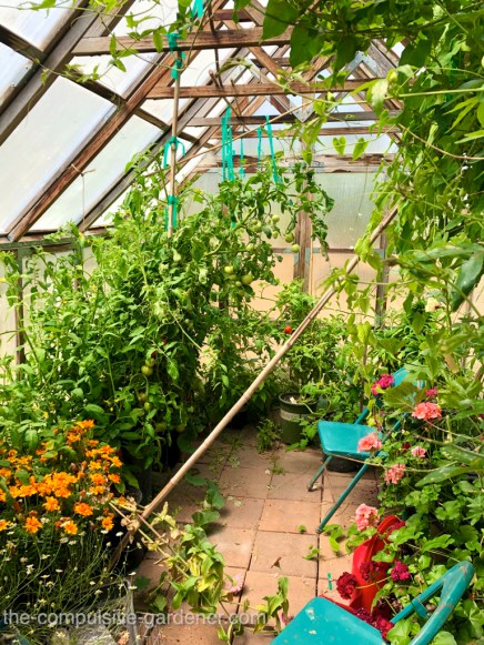 Jungle Vibe--the neglected greenhouse