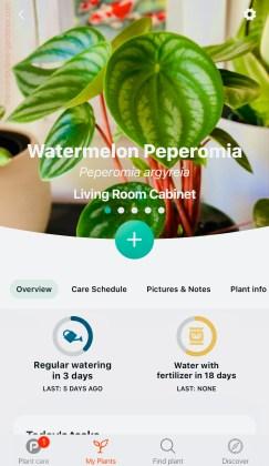 Planta app example-- showing watermelon peperomia