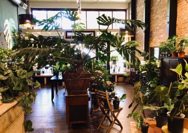 Botany Zhi in Santa Rosa