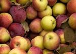 Apple Starts to Play Nice With the eBook Antitrust Monitor Antitrust Apple
