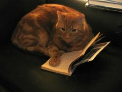 Here are Cats. With Books humor