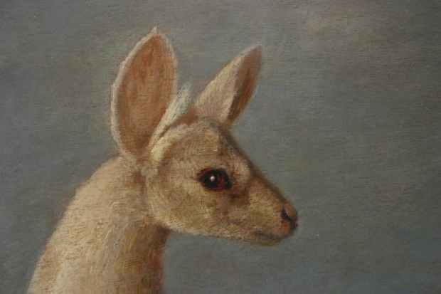 Guest Post: Why are Australian authors obsessed with killing off kangaroos? Editorials
