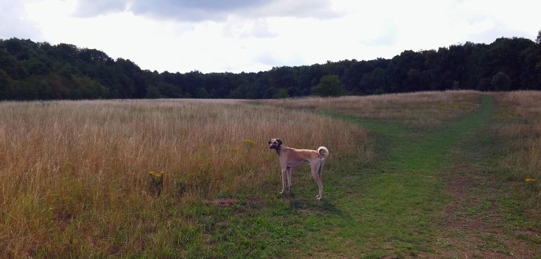 Hundefreiheit: Unterbacher Seerunde
