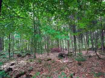 Lichter Laubwald