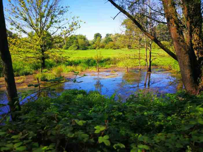 Sumpfland am Urdenbacher Altrhein (Foto: TD)