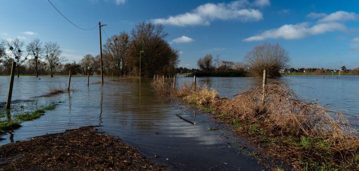 Winter 2021 - erst kam das Hochwasser in den Himmelgeister Rheinbogen...  (Foto: Hajo Kendelbacher)