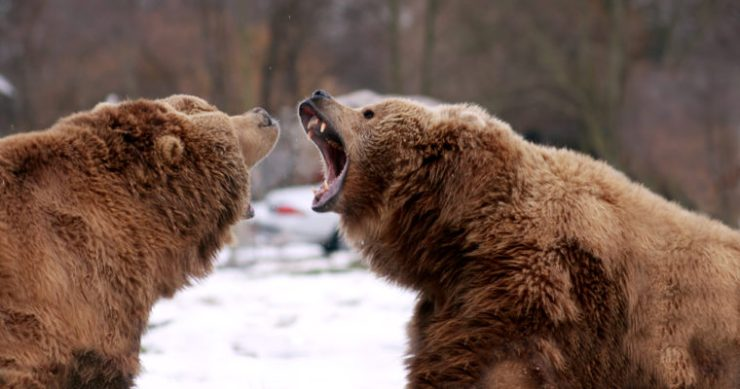 bitcoin bears bitmex ceo arthur hayes