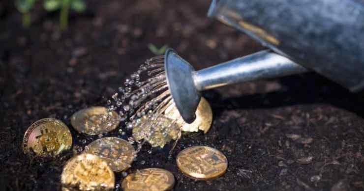 bitcoin garden crypto