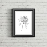 Jislaaik-Online-Shop-Olive-Arrow-Creative-Raw-Co-One-Line-Continuous-Line-Drawing-Art-Design-Photography-Protea