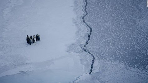 Photo: Kira Morris. A group of emperor penguins faces a crack in the sea ice, near McMurdo Station, Antarctica.