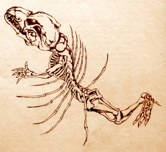 dragon-bones-4_1