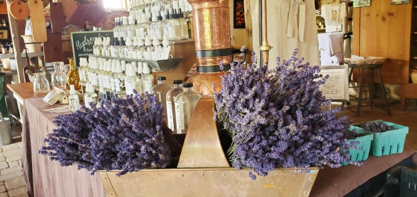 Lavender from Star Bright Farms