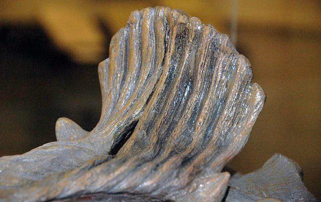 Cryolophosaurus ellioti theropod dinosaur