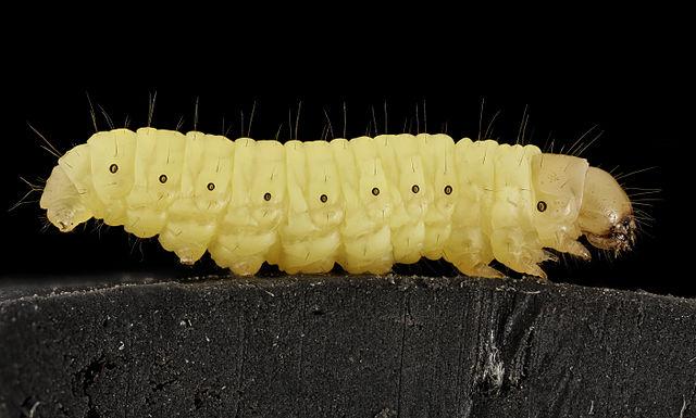 Good News caterpillar INKLINE