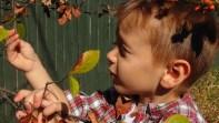 boy exploring nature