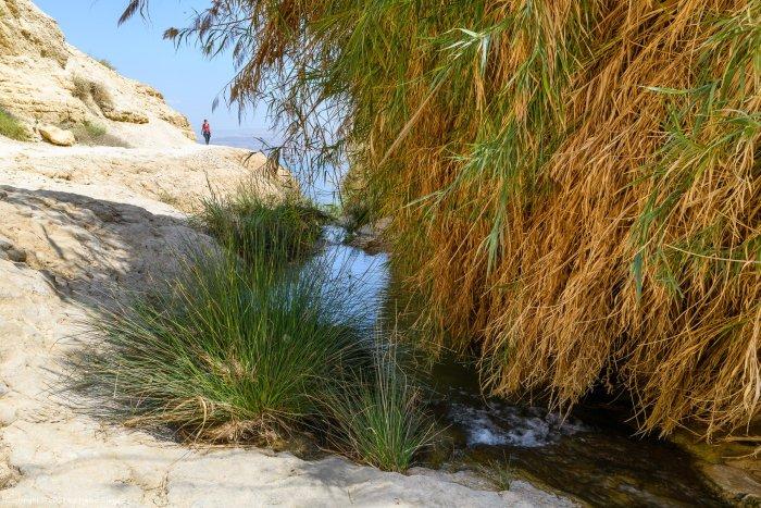 Upper David stream - Nahal David