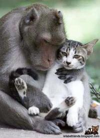 20040924_monkeycat.jpg
