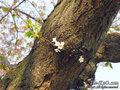 20090411_ritsuto03.jpg