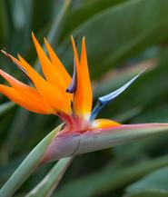 bird-of-paradise-bouquet-builder-the-little-flower-shop-florist-london-build-a-bouquet-online
