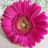 bouquet-builder-build-a-bouquet-online-florist-london-the-little-flower-shop-gerberas