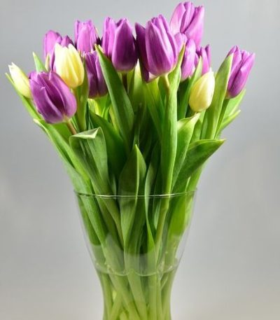 tulip-purple-pink-tulip-bouquet-large-tulip-flower-bouquet-mothers-day-flowers-the-little-flower-shop-florist-london-brixton-flowers-clapham