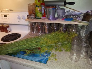 A large bunch of dill
