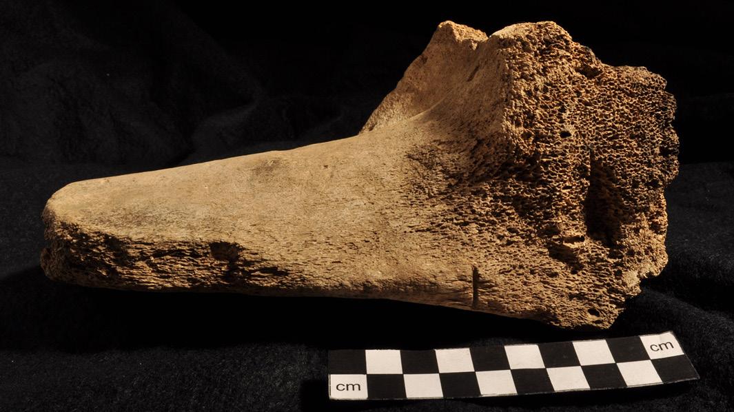 Photos: Andrew Hollingrake / UHI Archaeology Institute