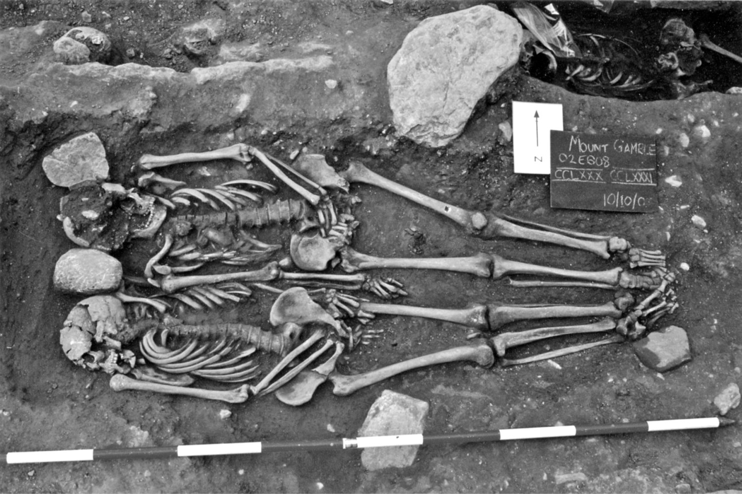 BELOW A rare example of a male double burial at Mount Gamble, Swords, Co. Dublin. Both males are 25 to 35 years of age, date from the 7th/8th centuries AD, and died from severe weapon trauma. One has been decapitated, though his head was placed in the correct anatomical position for burial, while the other suffered a fatal stab wound to the back. They might have died together in battle or a fight, or they may have been victims of ritual 'kin-slaying' the victims of a succession dispute.
