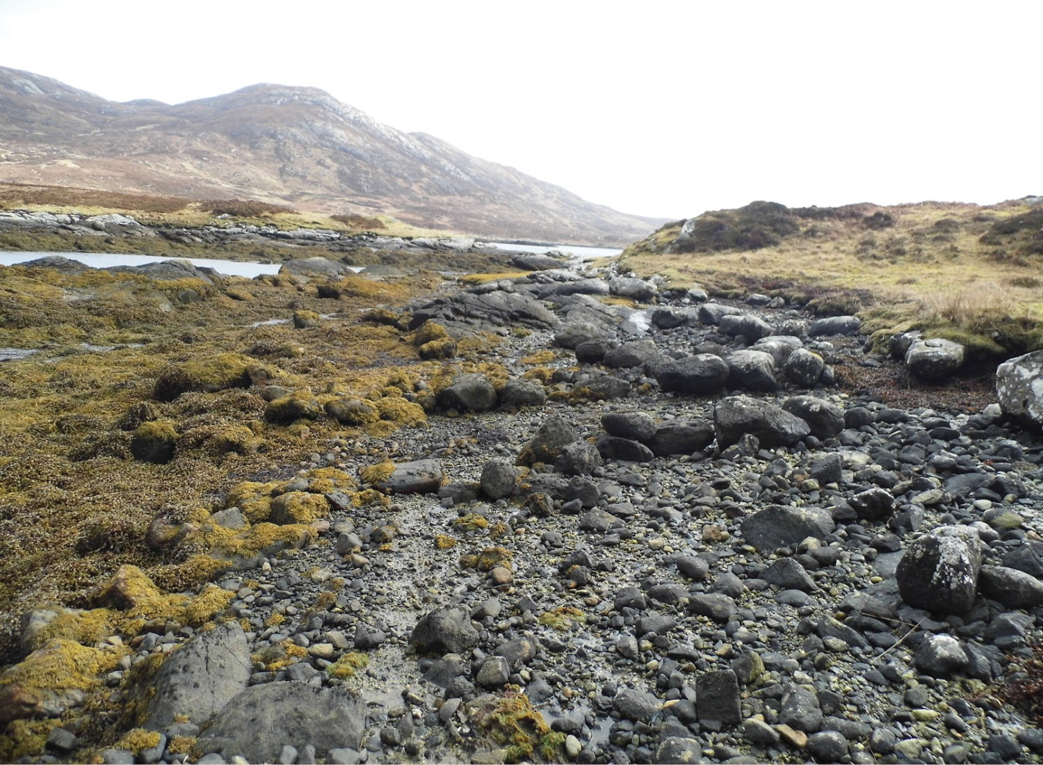 LEFT An informal landing spot on the shore, probably useful for loading and launching small boats as part of kelping activity. The shores of the loch have many similar places. BELOW The linear arrangement of stones has been identified as the house and enclosure occupied by 'Widow Currie' from at least 1810. Currie is recorded as having paid a substantial rent of £11 in 1813, and having sold as much as two tons of kelp in the same year. She and her family were one of the relatively well-to-do tenants trying their luck as kelp producers. The small surrounding enclosure would have allowed some subsistence farming.