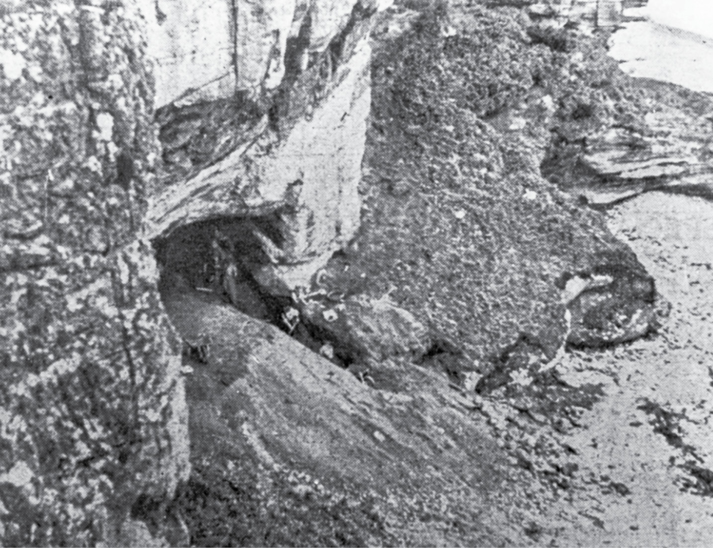 right Sylvia Benton excavated at the Sculptor's Cave between 1928 and 1930.
