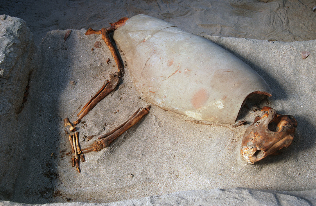 BELOW Many animals were buried in makeshift coffins or covered by pots, like the dog pictured.