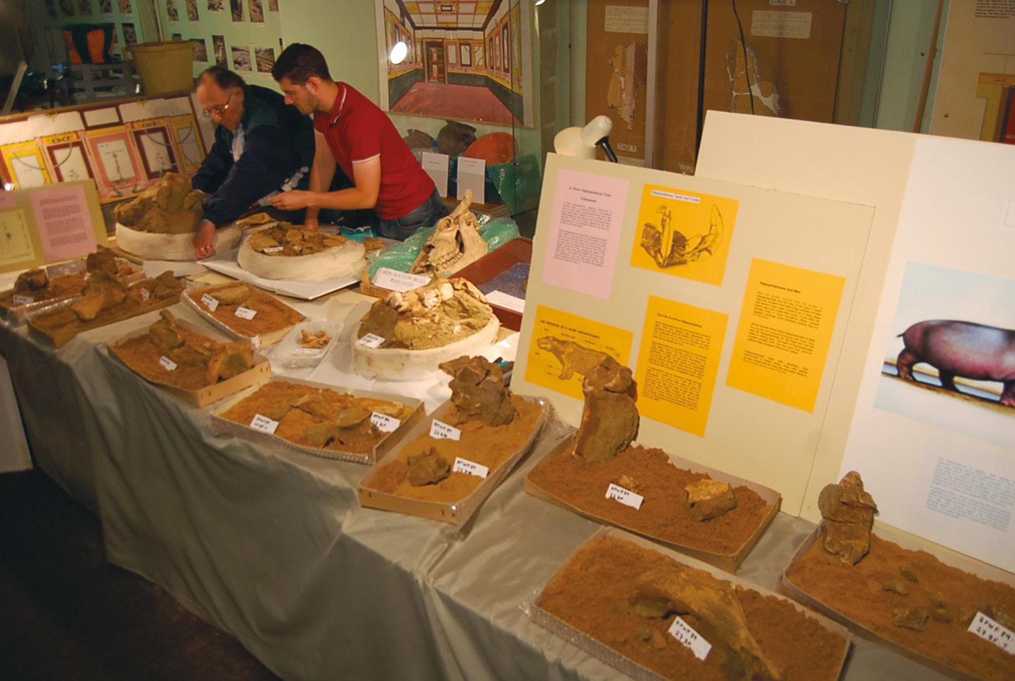 BELOW A display of hippopotamus bones excavated by the Unit at Folkestone in 2018.