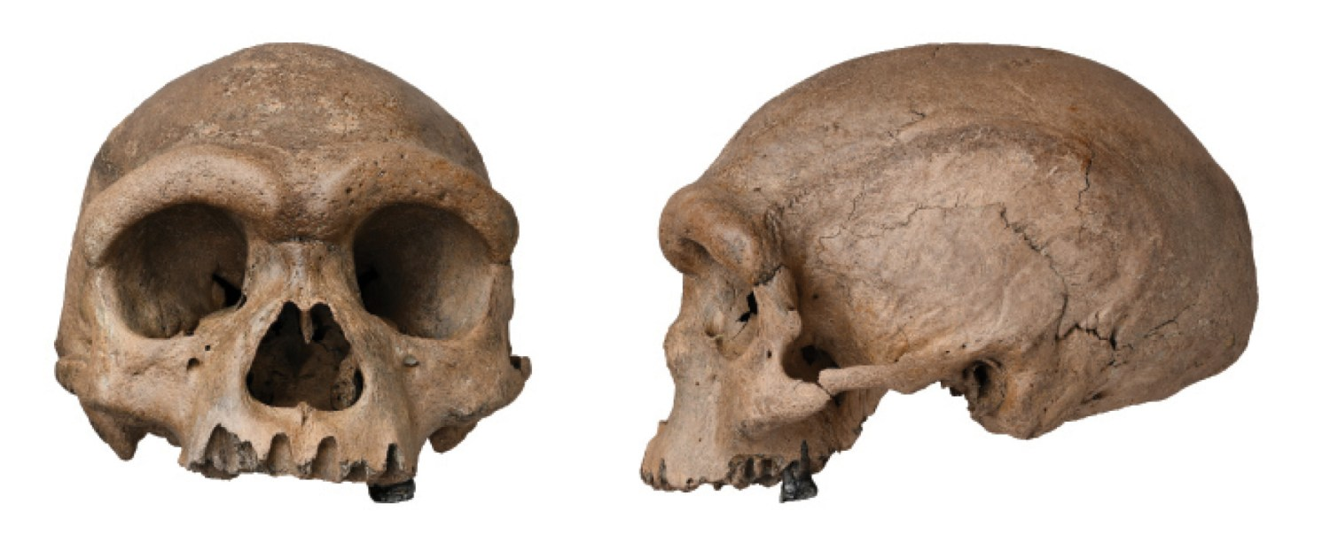RIGHT This cranium, found in Harbin City, China, displays a combination of primitive and modern characteristics, leading some researchers to
