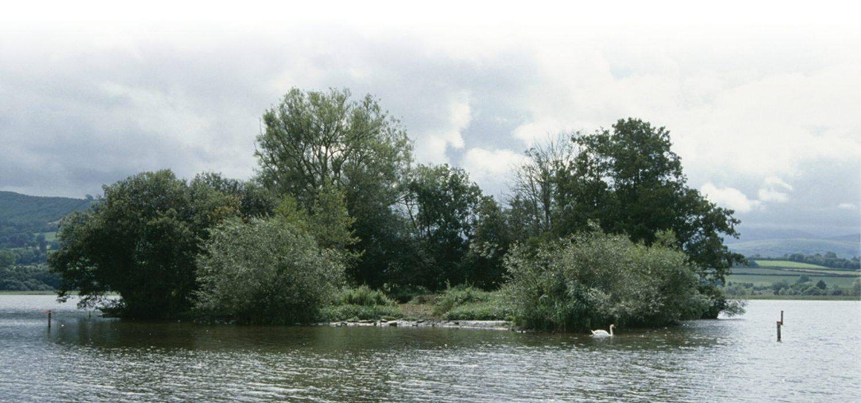 below The crannog in summer 2004, overgrown with willow and alder.