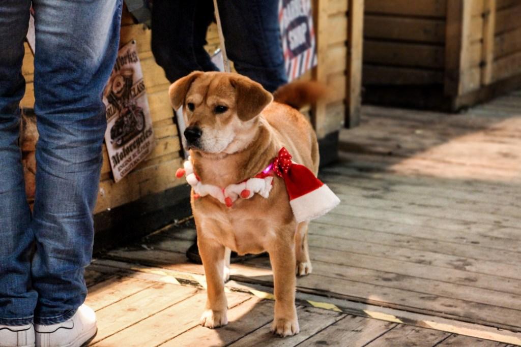 chien marché de Noël