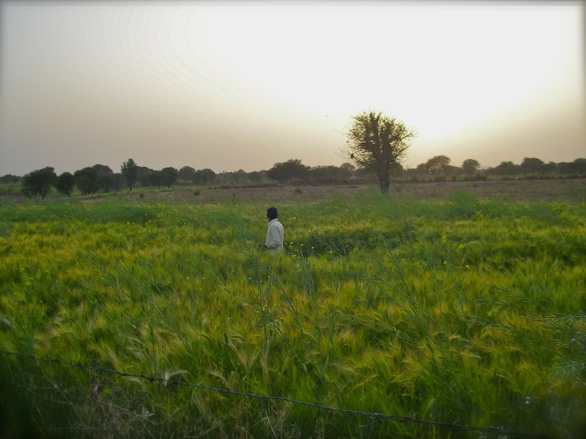Rural Rajasthan, India farm stay, Rajasthani culture