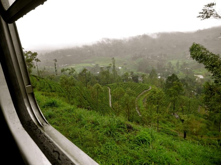 Sri Lanka tea plantations, Sri Lanka tea estates, Nuwara Eliya tea, Sri Lanka photos
